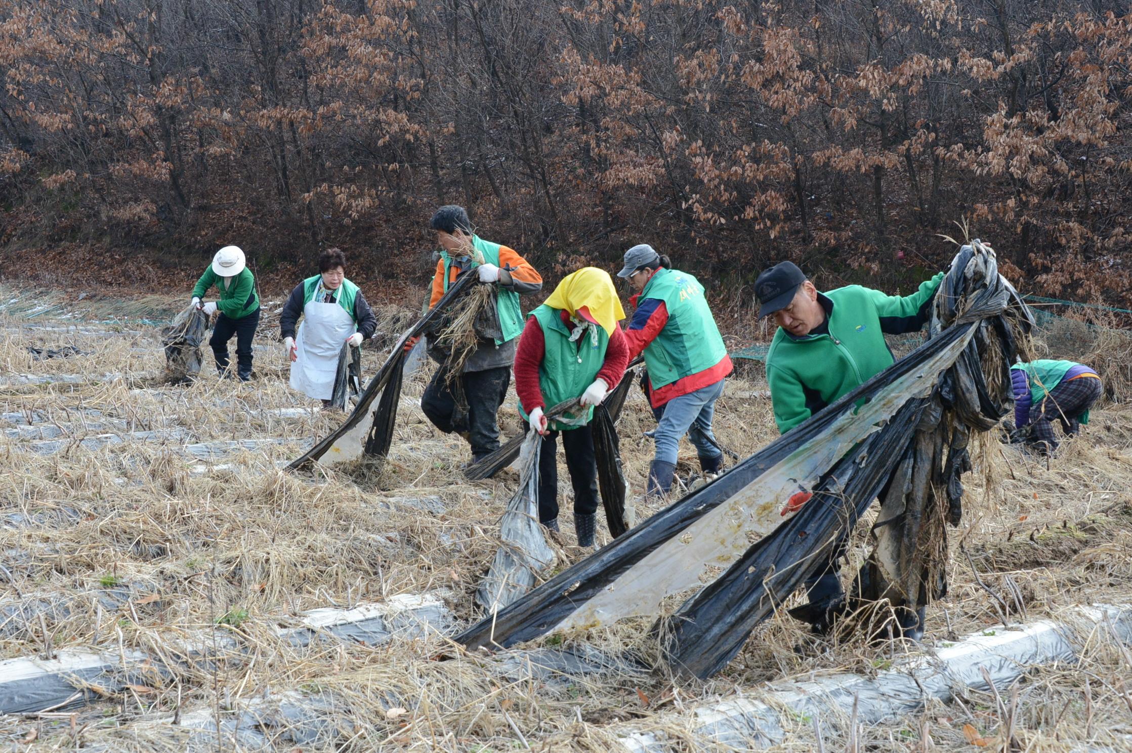 증평군 새마을지회 회원들, 생산적 일손봉사 [이미지]